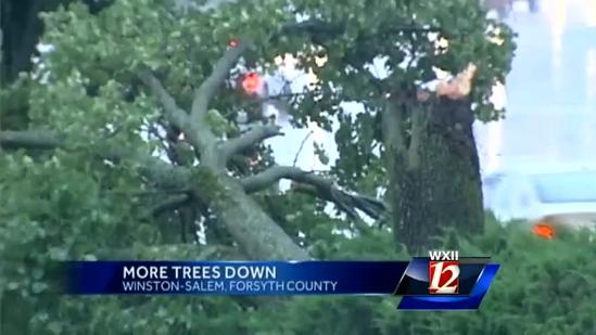 Raw: Tree fall captured on camera