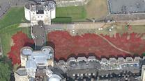 Raw: Poppies at Tower of London Honor WWI Dead