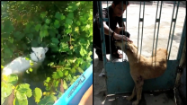Two Dogs Get Rescued From Tight Spots