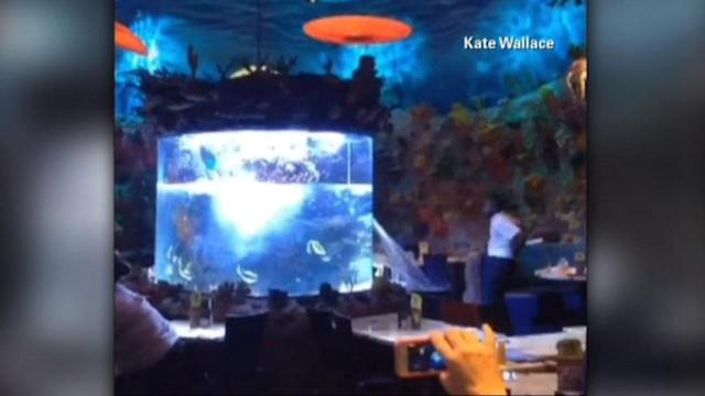 Large fish tank ruptures at Disney restaurant