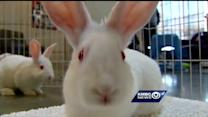 The Missouri House Rabbit Society