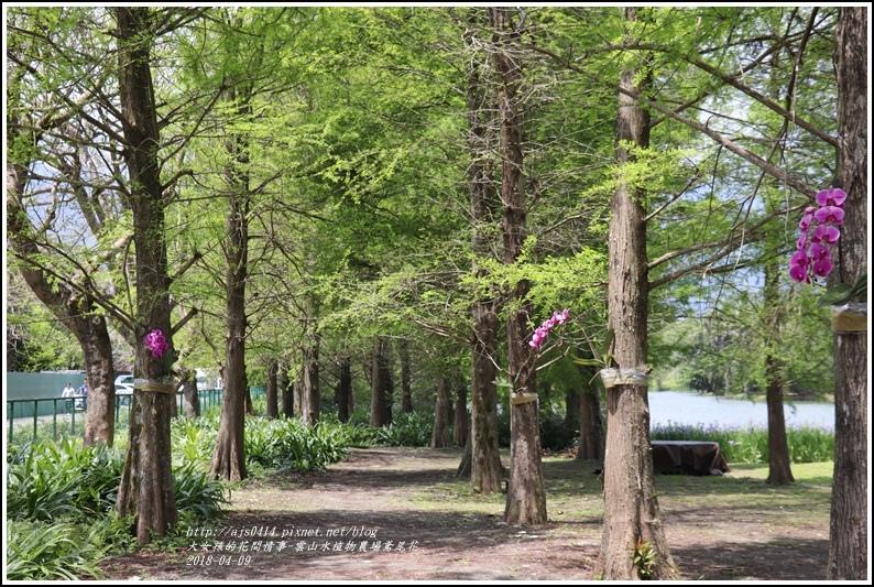 雲山水植物農場鳶尾花-2018-04-40.jpg