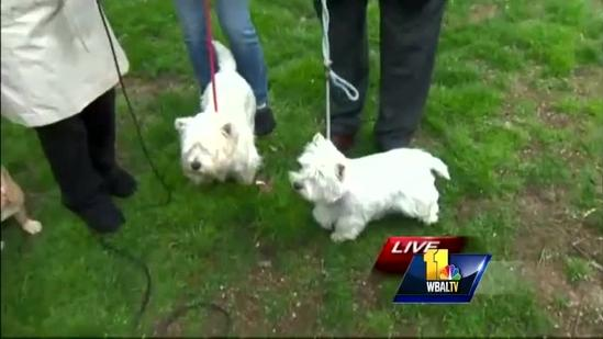 Ava visits pups prepping for weekend dog show