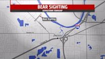Bear Spotted At Golf Course