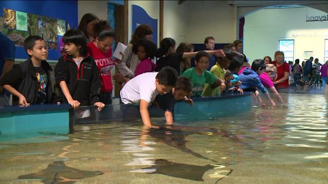 Mommy Minute: Maritime Aquarium`s New Shark Programs Aim To Put Kids At Ease