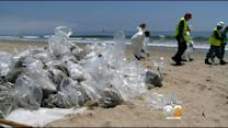 Specially-Trained Volunteers Descend On Oil-Fouled Santa Barbara Beaches
