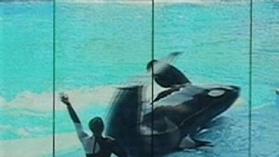 SeaWorld May Allow Whale Trainers Back In Water