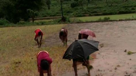 Odisha: climate change poses threat to tribes