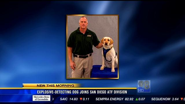 Explosives-detecting dog joins San Diego ATF