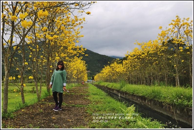 富源國中旁黃花風鈴木-2018-03-82.jpg