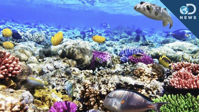 What Are Coral Reefs And What's Their Purpose? - DNews