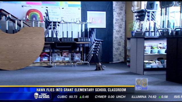 Hawk flies into Grant Elementary School classroom