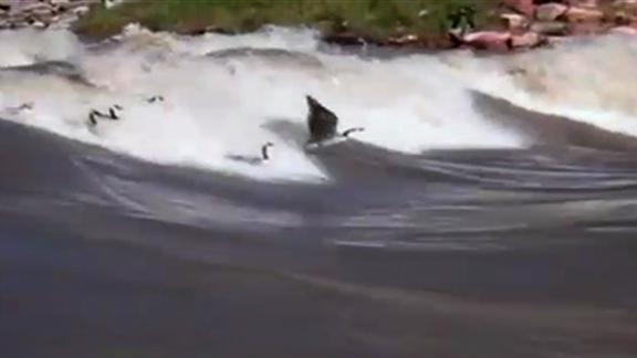 Surfing Geese Explained