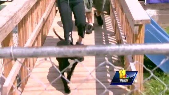 Bill would address all dogs, not just pit bulls