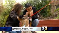 Dog Reunited With Utah Family After Missing For 2 Years