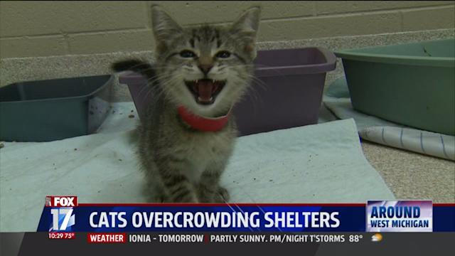 Cats Overrun Animal Shelters