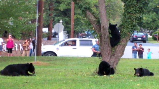 Mother bear and her cubs surprise NJ residents