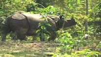 Centre sanctions One crore package for Kaziranga