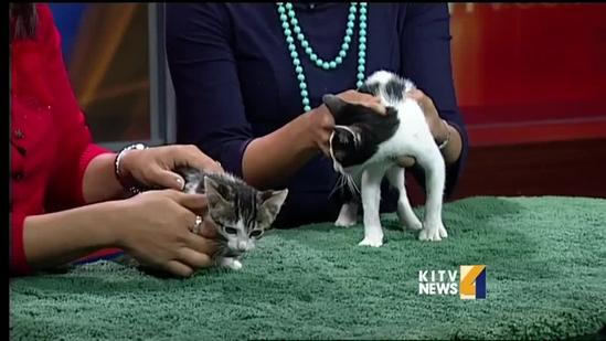 Pets on set: playful kittens