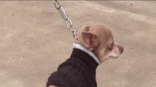 Bakersfield and Kern County Animal Control Helping People Be Responsible Pet Owners