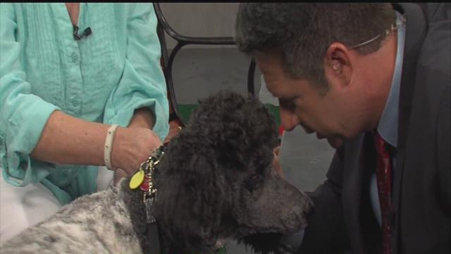 ABC Action News: Weekend Edition Rescues in Action Trixie