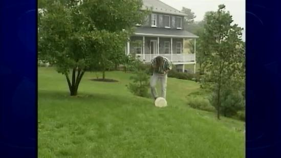 WILD MOMENTS: Yellow jackets becoming more aggressive