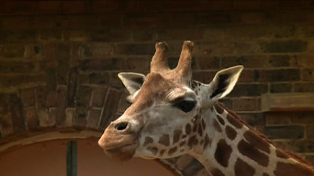 London Zoo Animals Cool Off In Hot Weather