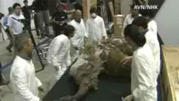 Woolly mammoth found frozen for 39,000 years to be displayed in Japan