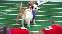 Super Bowl 2013: Sneak Peek at Puppy Bowl IX