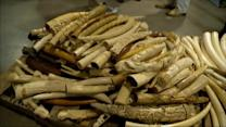 US to Deal Crushing Blow to Illegal Ivory Trade