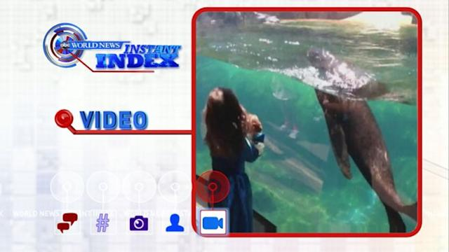 Instant Index: Little Girl, Sea Lion Have Game of Tag