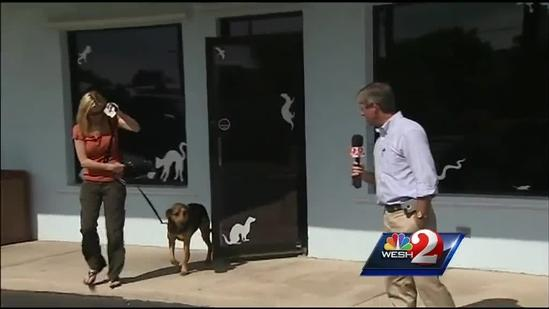 Dog rescued from Banana River