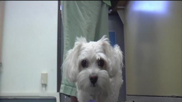 Kern County Animal Shelter Looking For New Home