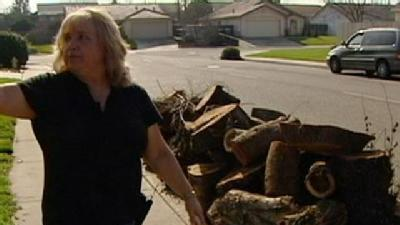 Cash Deal For Tree Removal Goes Sour
