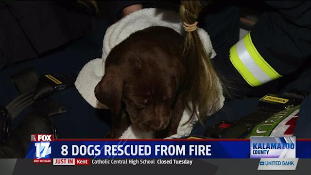 Puppies Rescued from Mobile Home Fire