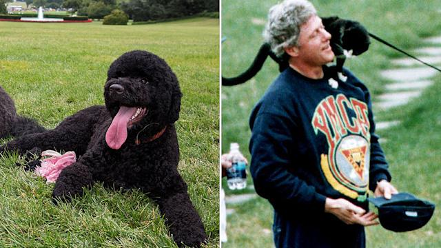 Sunny Obama, Barney Bush, Socks Clinton - And 8 More Memorable White House Pets!
