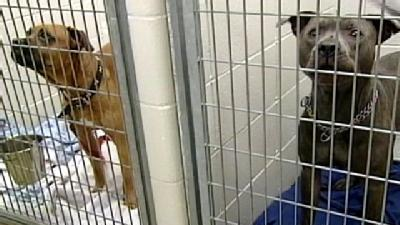Humane Society Holds Dogs That Attacked Children