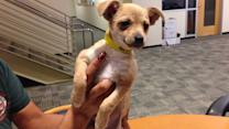 Pet of the Week: 2-month-old puppy named Brandy