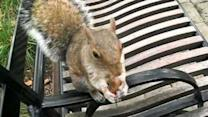 Inquisitive Squirrel Likes to Hide Nuts in Man's Clothing