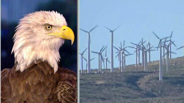 Study: 'Alarming' number of eagles killed by wind farms