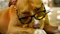 These Are The Reasons You Should Never Have A Pit Bull