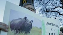 Auction Draws Animal Rights Protesters