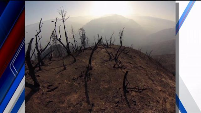 An Up-Close Look At The Rim Fire Aftermath