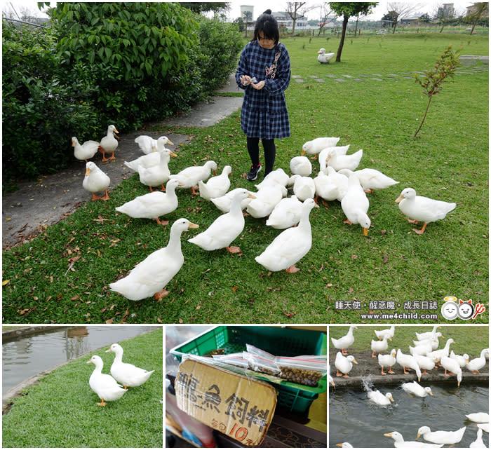 宜蘭景點 餵鴨