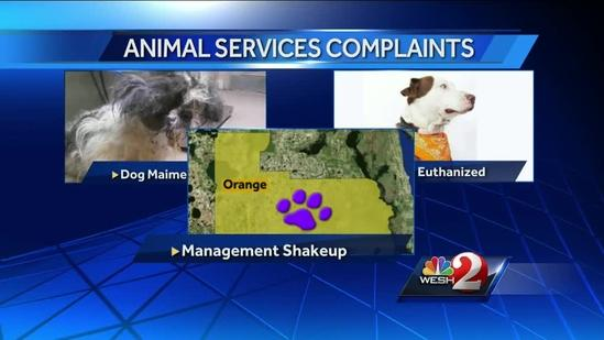 Activists allege mistreatment at Orange County Animal Services