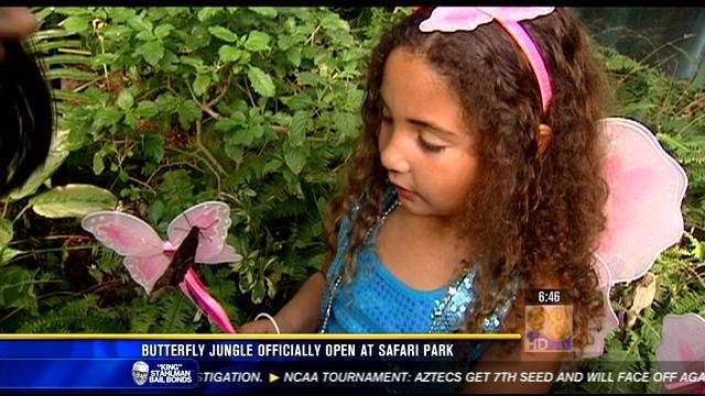 Butterfly Jungle officially open at SD Safari Park