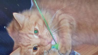 Police: Cat Shot, Killed By Arrow