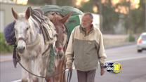 Man with 3 mules walks through Fresno County