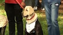Dog owners adorn their pets in ethnic wear in Bengaluru to mark Gandhi Jayanti