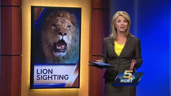 Deputies find no sign of lion loose in Warren County